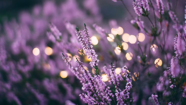 Lavender and essential oils help you to relax. An air purifier removes odors and irritants.  Relaxation produces healthy sleep.
